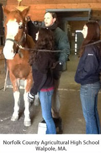 Denise giving equine massage instruction and a hands-on demonstration at a clinic in Norfolk